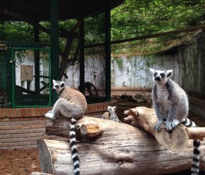 Monkeys in Loro Sexi park