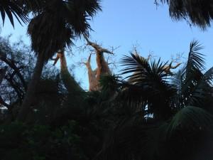 Biopark, tree