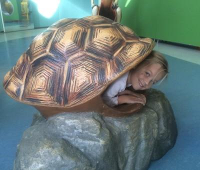 turtle kid