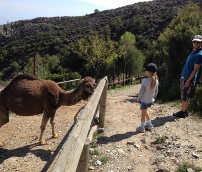 Peña Escrita, camel