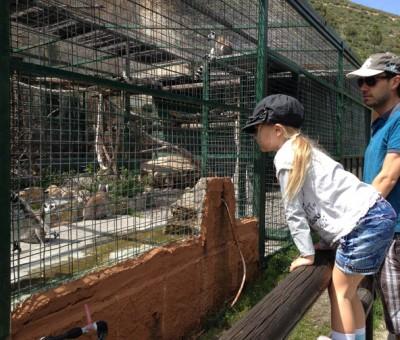 Peña Escrita, watching lemurs